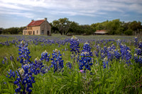 Texas Bluebonnets and Old Farmstead
